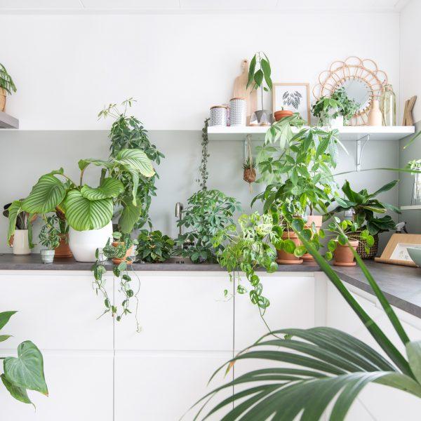 urbanjungle planten in huis groen keuken ikea intratuin plants