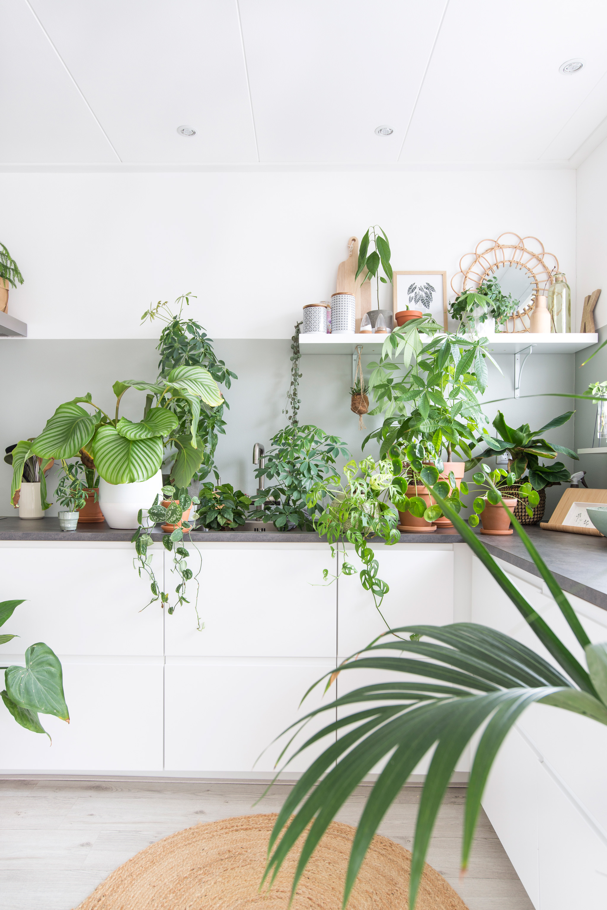 urbanjungle planten in huis groen keuken ikea intratuin plants