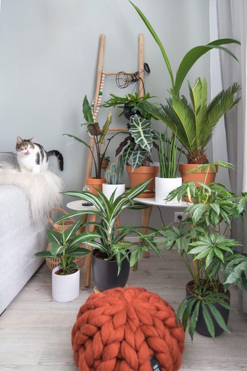 Win je eigen groene Urban Jungle!