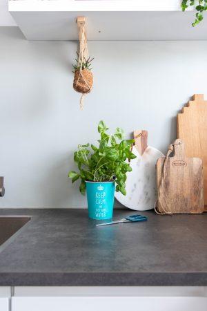 Je kruidenplant makkelijk in leven houden.
